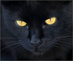 halloween simbologia Gato-negro