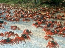 Christmas Island: Natures