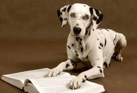 Ranking de Inteligencia por Razas Perro-inteligente