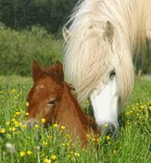 hest_foel.png