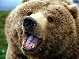 external image The_brown_bear_-_large_bear.jpg&t=1