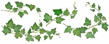 external image English_Ivy_HORIZONTAL_op_740x304.jpg
