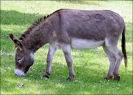 http://t1.gstatic.com/images?q=tbn:4uidPF7Dg7OjpM:http://2.bp.blogspot.com/_R9qEkHDLKx4/TGumjBP85PI/AAAAAAAAAD0/erS52fg-wQ8/s1600/donkey.png&t=1