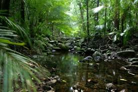 Daintree Rainforest.