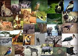 منتدي عالم الحيوان