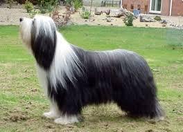 perros de raza pura