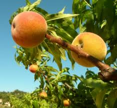 http://t1.gstatic.com/images?q=tbn:A1bBNGh-kn45YM:http://www.journaldunet.com/economie/agroalimentaire/dirigeants/salaire-agriculteurs/images/3.jpg