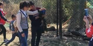 Pavões morrem para turistas tirarem selfie em zoo na China - ANDA ...