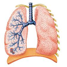 Understanding Allergic Bronchitis