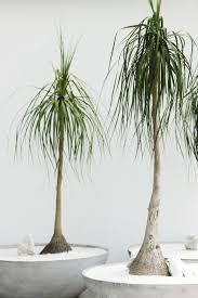 Best Office Desk Plants The Best Indoor Plants For Australian Offices Lifehacker