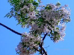 [Super Xịn] Bạn thuộc loại cây gì và bạn là người thế nào? Images?q=tbn:ANd9GcQ2KxUcsgXFBbLa1ERzfJRLlbrjj33KAQREOcCm5fBd9OgqwylP