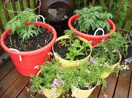 container gardening tips for homesteaders