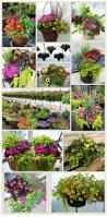 54 best color themes images on pinterest flower gardening