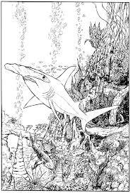 hammerhead shark by stvnhthr on deviantart