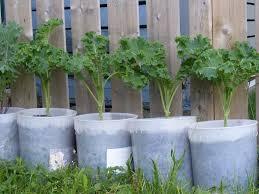 compost halifax garden network