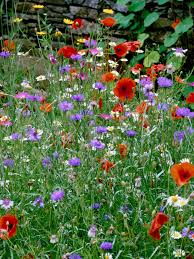 how to landscape with colorful wildflowers hgtv