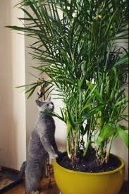 32 best house plants images on pinterest houseplants indoor