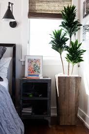 expert advice 10 best low maintenance houseplants gardenista