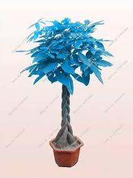 339 best unique plant images on pinterest plants exotic plants