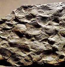 %name Ricercatori e geologi europei in visita al Museo geologico delle Dolomiti di Predazzo