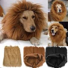 Dog Costumes Halloween 15 Clever Dog Costumes Beggin U0027 Attention Howloween