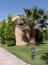 Home Landscape Design Tool by Landscape Design Palm And Trees Landscape Design Photo Room Design
