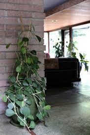 397 best indoor garden images on pinterest plants indoor plants