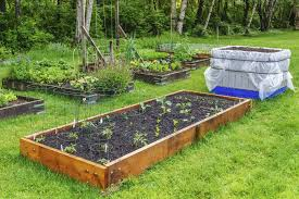 Manure For Vegetable Garden by How To Create Your Own Fruit And Vegetable Garden