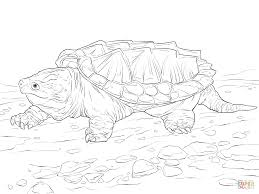 walking alligator snapping turtle coloring page free printable