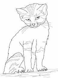 cat and dog coloring pages eson me