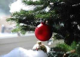 Božićna drvca Images?q=tbn:ANd9GcQ7JBVqzzxyfUYNcpA2A8nFuLkywapw0SfgShrgJDhbcINvpE49xg