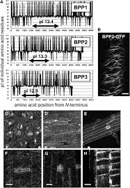 purification and characterization of novel microtubule associated