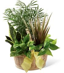 sympathy plants for home delivery