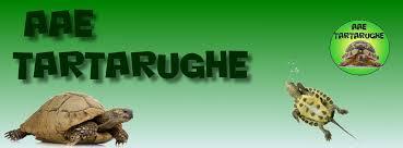AAE Tartarughe