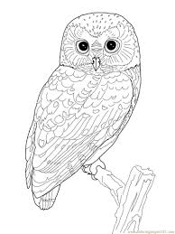 printable owl coloring page coloring pages owl birds u003e owl