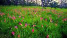 10 ที่เที่ยวชมดอกไม้สวยสุดๆ ใน