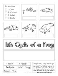tadpole coloring page frog preschool printables