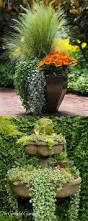 114 best container gardening images on pinterest pots flowers