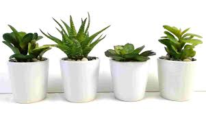 Office Desk Plants by Four Indoor Plants Every Woman Is Fond Of Interior Office Loversiq