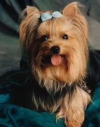 ¿Te gustan los perros? ¿Quieres aprender mas sobre ellos?