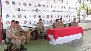 Cães do Corpo de Bombeiros ajudam no resgate às vítimas em MG ...