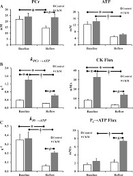 Indeed Ckm Creatine Kinase Overexpression Improves Atp Kinetics And