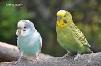 عصافيرررر images?q=tbn:ANd9GcQ