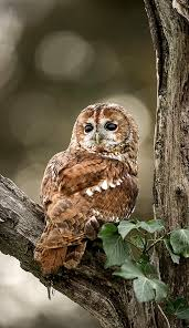 236 best owls cards crafting and photos images on pinterest