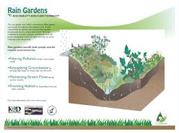 resource library 12 000 rain gardens