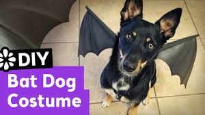 Bat Costumes Halloween Diy Bat Dog Halloween Costume Sea Lemon