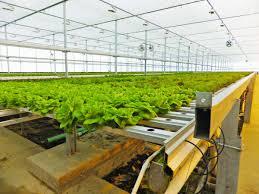 hydroponics highway u2013 find hydroponic stores near me with regard