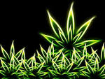 free marijuana screensavers