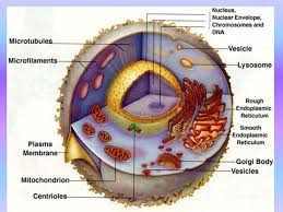 Slide   of    The Fossil Record  Slide   of    Fossils and Ancient     Slide    of    Geologic Time Scale Cretaceous Jurassic Triassic