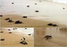 Berenang di Tepian Pantai Pangumbahan-k3s